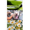 Shamp'Eol Fleurs et Fruits (Flowers) – 250 ml