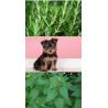 Shamp'eol Plantes (Herbal) – 250 ml