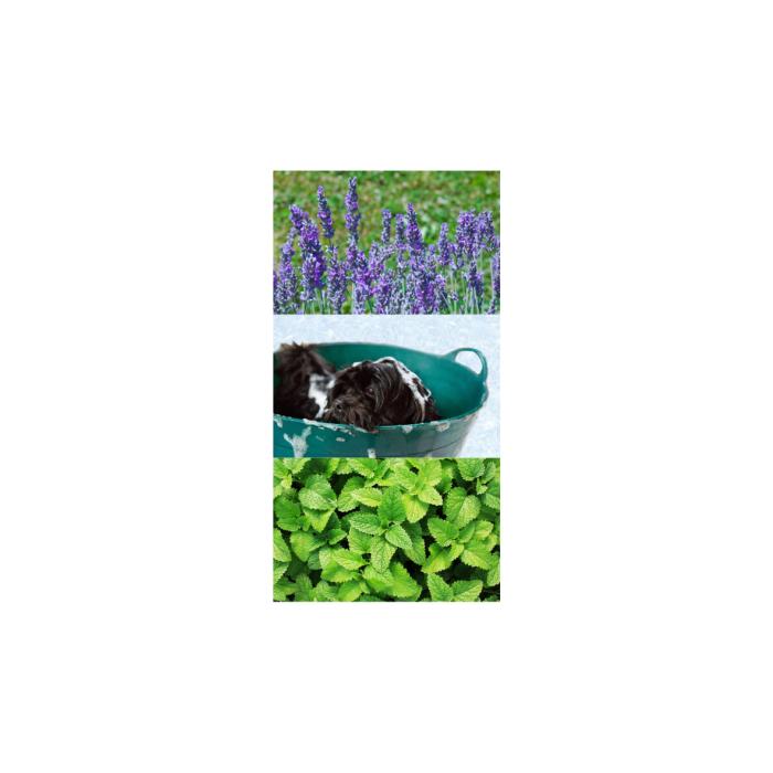 Shampoing Eol Sensitive – PH neutre – 250 ml