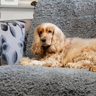 Couverture confortable et antidérapante (Pet Rebellion Comfy Cover)