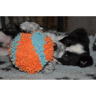 Balle Soft (Indoor Ball)