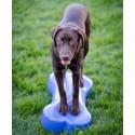 Plate-forme d'équilibre pour chien (DogBalanceBone)