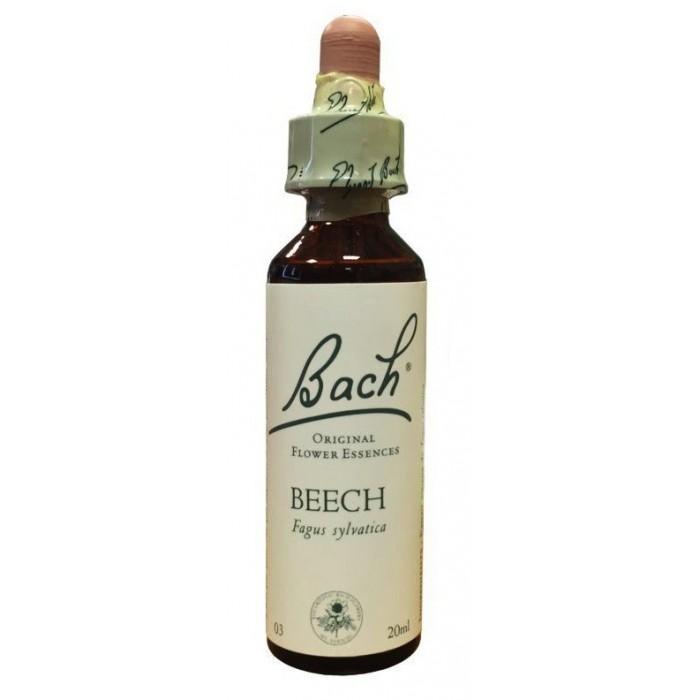 Beech (Hêtre)