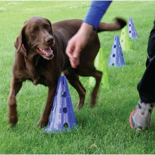 Kit Cavaletti (Dog Agility Kit)