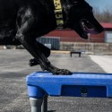 Plate-forme d'entraînement pour chiens (Sports Klimb Blue)