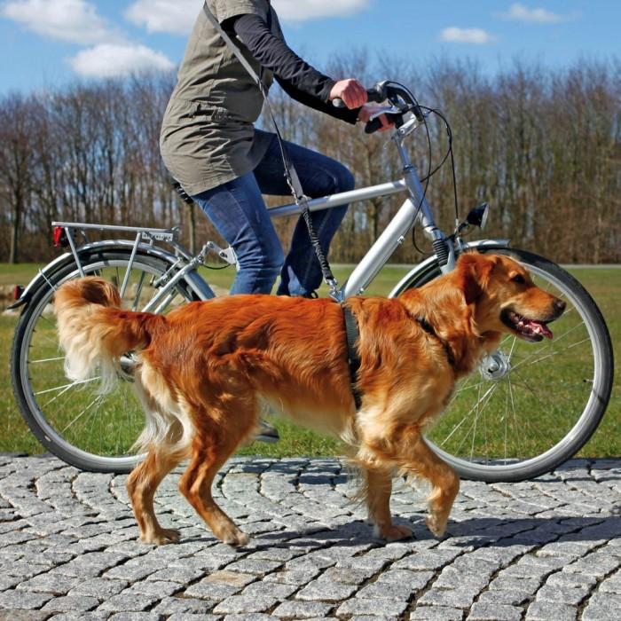 Laisse vélo & jogging
