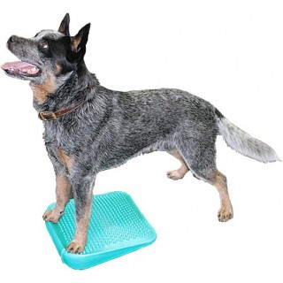 Rampe d'équilibre (FitPAWS® Dog Balance Ramp)