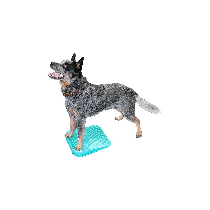 Rampe d'équilibre (FitPAWS® Dog Balance Ramp)