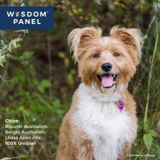 Test ADN pour chiens (Wisdom Panel TM 2.0)