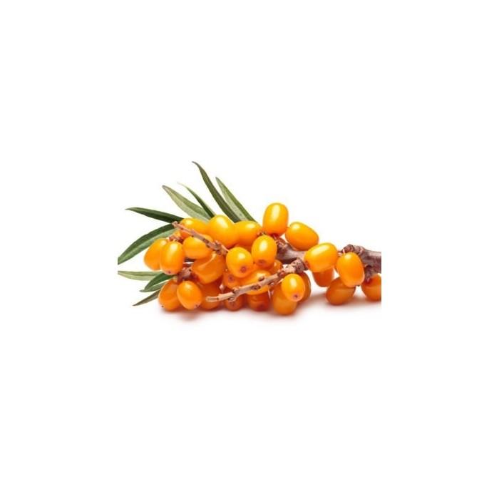 Shampooing BIO 250ml à l'Aloe Vera (Maelson 4FUR Natural Shampoo)