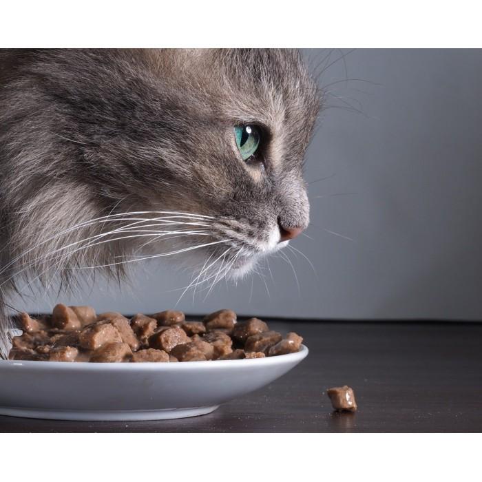 Croquettes de volaille fraîche Chat adulte 500 g
