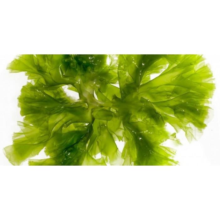 Mélange d'algues (Greenheart Algea Mix)