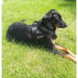 Harnais Animalin® CAMO Vert/orange (7 tailles)