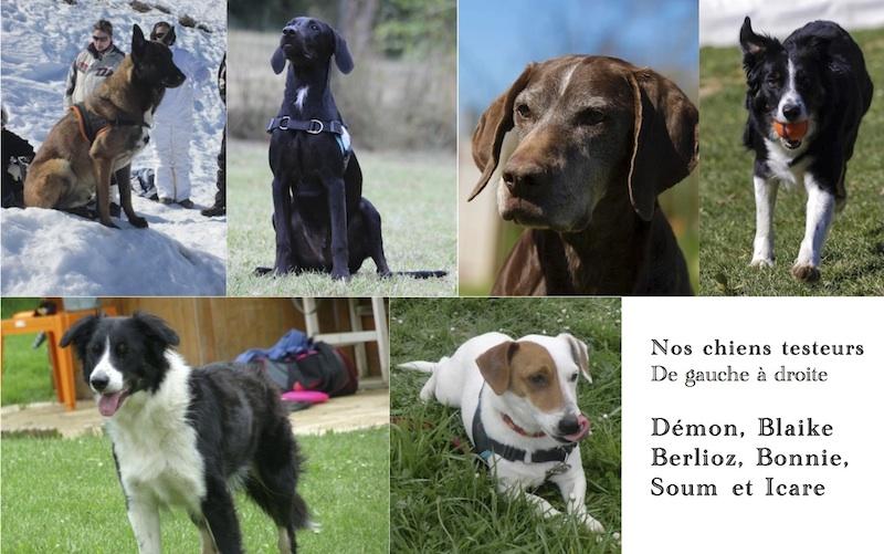 Nos chiens testeurs
