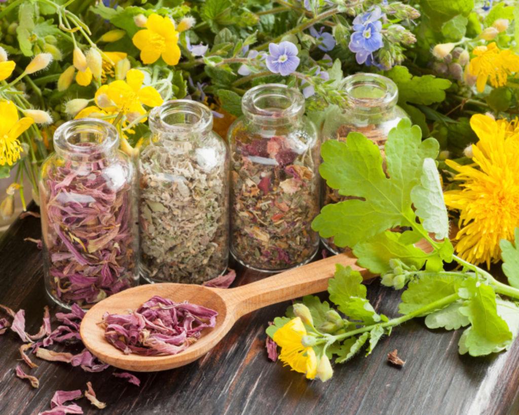 Phytotherapie les plantes animalinboutique